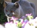 Chatterie des Catsydias